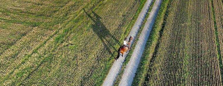 équitation, promotion d'un cheval